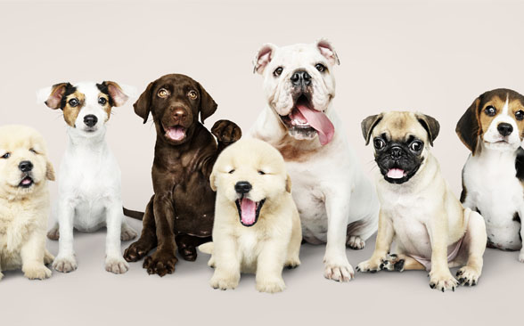 Top Dog Breeds and Popular Names