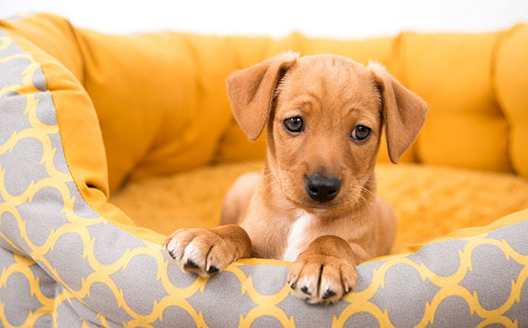 Top Tips for Your New Puppy