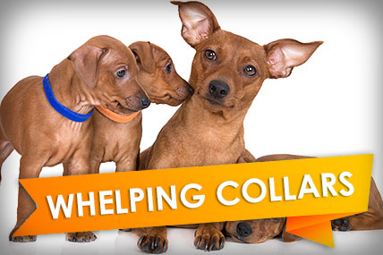 Buy Whelping Collars